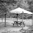 Old wooden gazebo under the woods. Black and white photo — Stock Photo #65534287