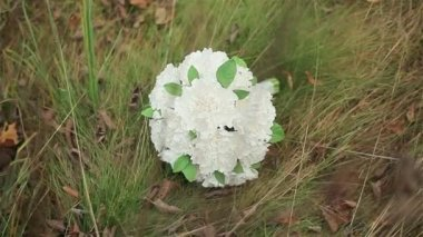 Weddding bouquet of white flowers lying on autumn grass — Stock Video