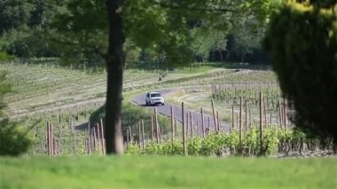 White car moving down the road among the vineyards in Italy — Stock Video