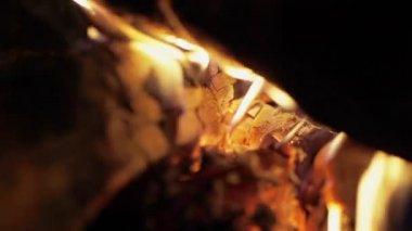 Bright burning wood, campfire macro video — Stock Video