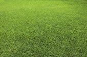 Fond du parfait coupe l'herbe verte — Photo
