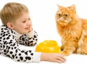Playful little boy and serious red cat — Stock Photo