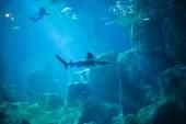 Egzotyczne ryby w akwarium — Zdjęcie stockowe