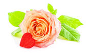 Rose flower with heart on white background — Stock Photo