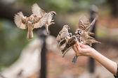 Feed a bird — Stock Photo