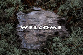 Welcome plate on wood texture. Sample. Tutorial. Birch bark in the moss. — Stock Photo