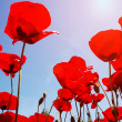Looking up at red poppies in spring field — Stock Photo #67186963