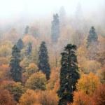 paysage mystérieux : clairière dans le matin brumeux — Photo #67231961