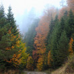 paysage mystérieux, déboisement dans le matin brumeux — Photo #70730373