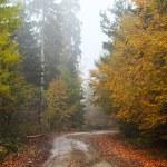 paysage mystérieux, déboisement dans le matin brumeux — Photo #70730383