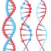 DNA molecules spirals — Stockvektor