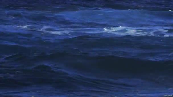 Olas - Surf — Vídeo de stock