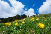 Lush Mountain Meadow — Stock Photo