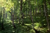Forest in Spain, Europe — Stock Photo