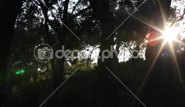 Sunlight - branches - leaves - forest — Stock Video