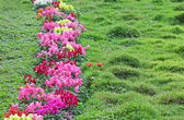Flower Hedge in Grass Lawn — Stock Photo