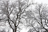 Snowy Tree In The Winter — Foto Stock