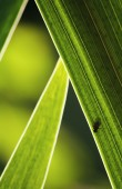 Fly on the leaf — Stock Photo