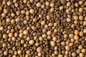 The green manure seeds — Stock Photo
