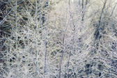Views and details of snow covered forest — Stock Photo