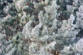 ビューと雪の詳細をカバー フォレスト — ストック写真