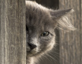 Кitten peeks out,looks into the camera with one eye — Stock Photo