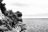 La côte rocheuse. Arbre sur la montagne. Noir blanc — Photo