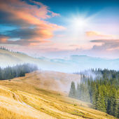 Carpathian mountain valley — Stock Photo