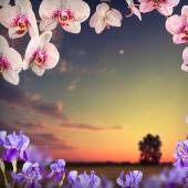 Orchid flowers background — Stock Photo