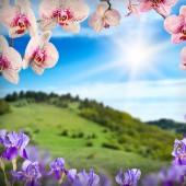 Orchid цветы фон — Стоковое фото