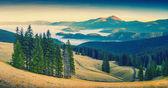 Vale de montanhas dos cárpatos — Foto Stock