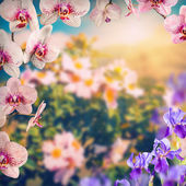 Orchid and blue irish flowers — Stockfoto