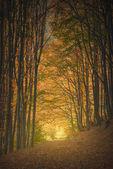 Carpathian magic golden tonnel — Stock Photo