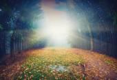 Magic autumn forest — Foto Stock