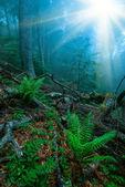 Misty foggy forest — Stock Photo