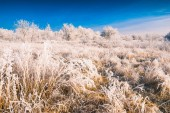 Hoar frost valley — Stock Photo