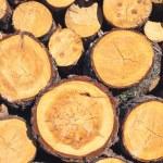 Logs texture — Stock Photo #65889419