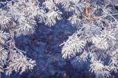 Hoar frost background — Stock Photo
