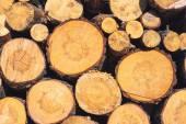 Logs texture — Stock Photo