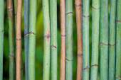Green bamboo fence background — Stock Photo