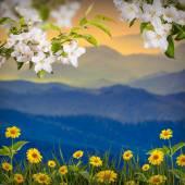 苹果花和黄色雏菊 — 图库照片