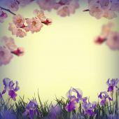 Sacura flowers and yellow daisies — Stock Photo