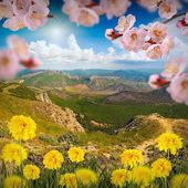 Mountain valley with sacura flowers — Stock Photo