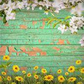 Yellow flowers background — Stock Photo