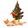 Cat and New Year tree — Stock Photo #67561059