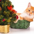 Cat and New Year tree — Stock Photo #67561117