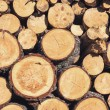 Logs background — Stock Photo #69549277