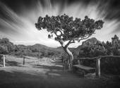 Crimea national park. Black and white — Stock Photo