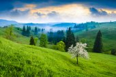Flowering tree on a green hill — Stock Photo