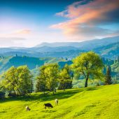 Valley with cow — Stock fotografie